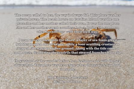 sandcrab copy